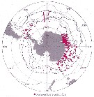 Species Paraeuchaeta antarctica - Distribution map 20