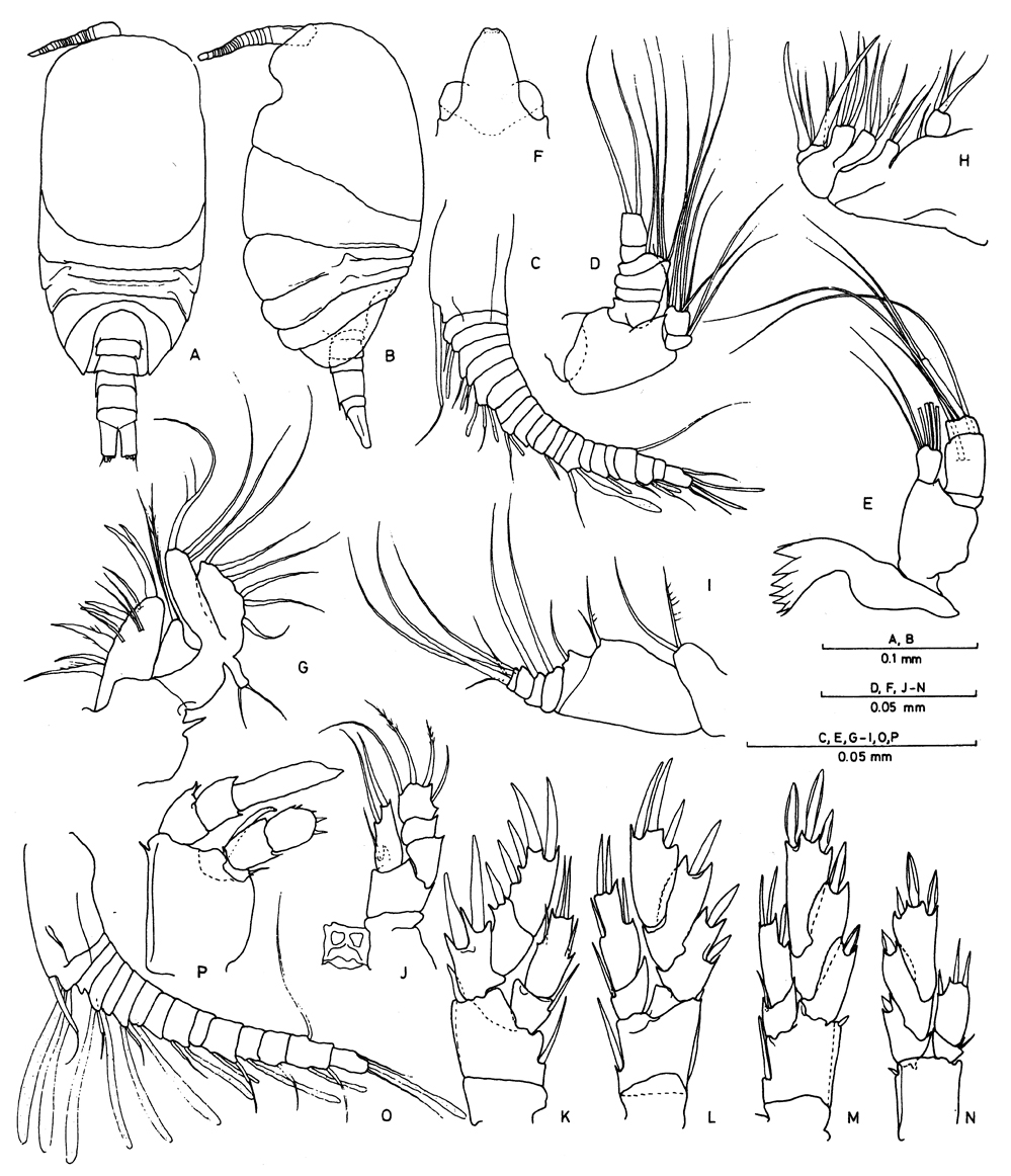 Platycopiidae