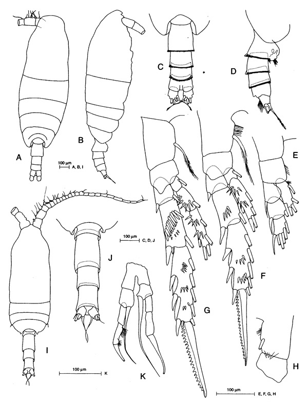 Species Spinocalanus brevicaudatus - Plate 6 of morphological figures