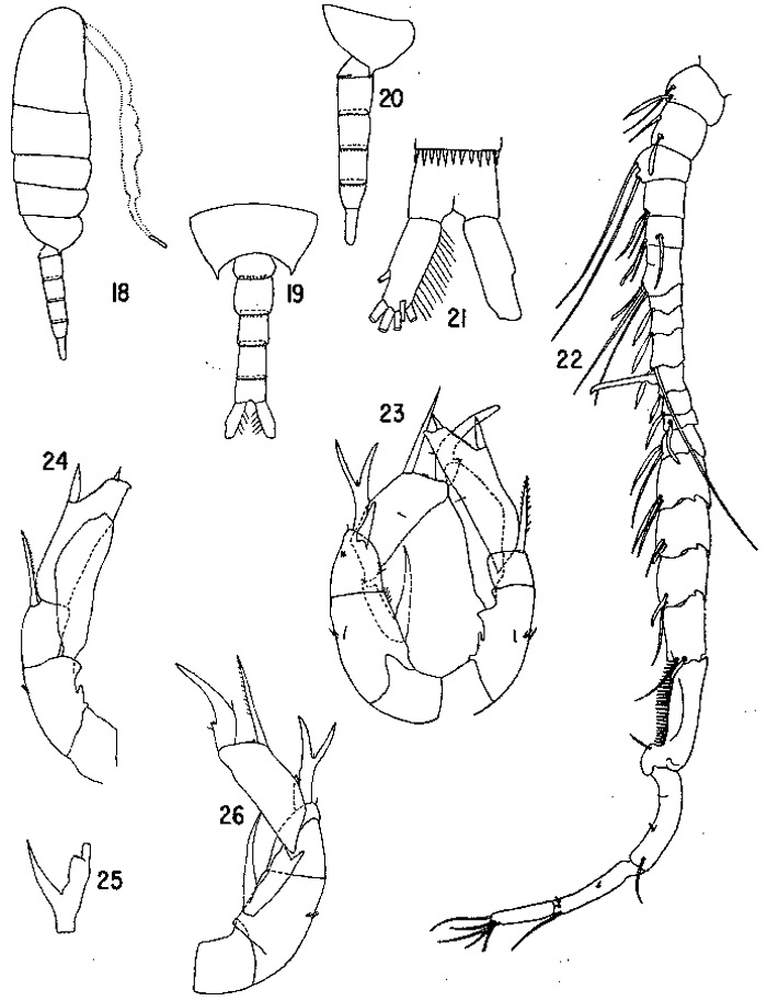 Species Pseudodiaptomus marinus - Plate 3 of morphological figures