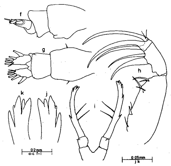 Species Candacia discaudata - Plate 2 of morphological figures