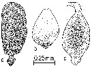 Species Calanus hyperboreus - Plate 16 of morphological figures