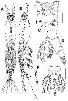 Species Cymbasoma alvaroi - Plate 1 of morphological figures