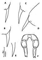 Species Clausocalanus lividus - Plate 5 of morphological figures