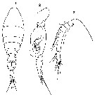 Species Oncaea curvata - Plate 9 of morphological figures