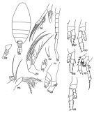 Species Disco inflatus - Plate 1 of morphological figures