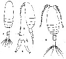 Species Clausocalanus farrani - Plate 13 of morphological figures