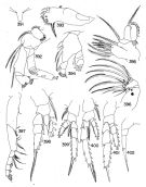 Species Temorites similis - Plate 3 of morphological figures