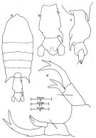 Species Pontellopsis herdmani - Plate 1 of morphological figures