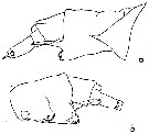 Species Anomalocera opalus - Plate 2 of morphological figures