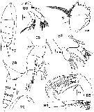 Species Temorites spinifera - Plate 2 of morphological figures
