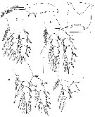 Species Benthomisophria palliata - Plate 3 of morphological figures