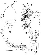 Species Archimisophria discoveryi - Plate 3 of morphological figures