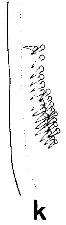 Species Euchirella rostrata - Plate 10 of morphological figures