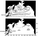 Schematic current systems and sampling stations in the subarctic Pacific Ocean and neighboring waters